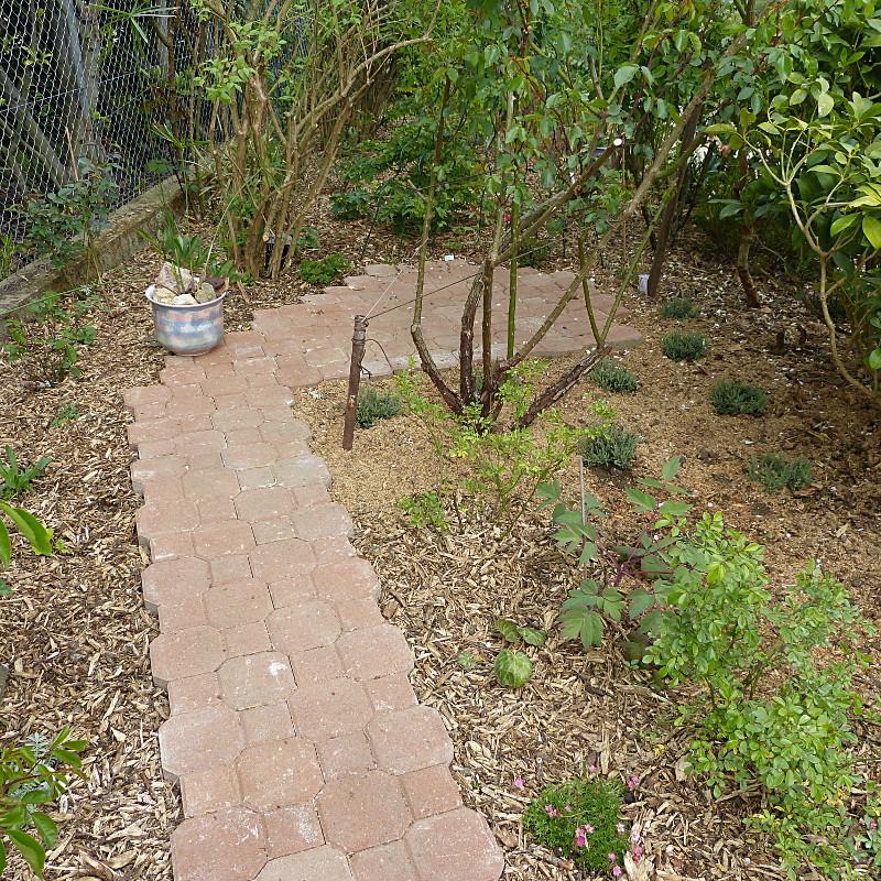 jardin des `MAL`AKHIM  - Page 4 Lysiane:visite_du_jardin:2014:p1110481