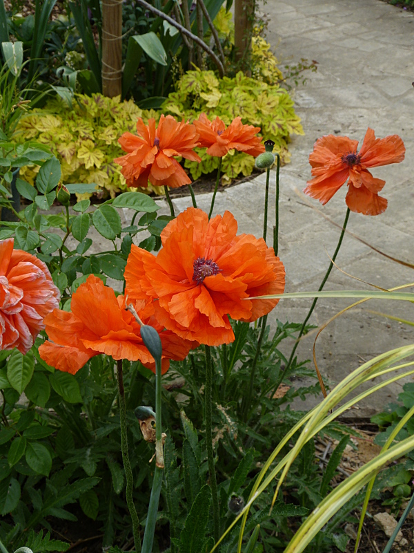 jardin des `MAL`AKHIM  - Page 4 Lysiane:visite_du_jardin:2014:p1110846