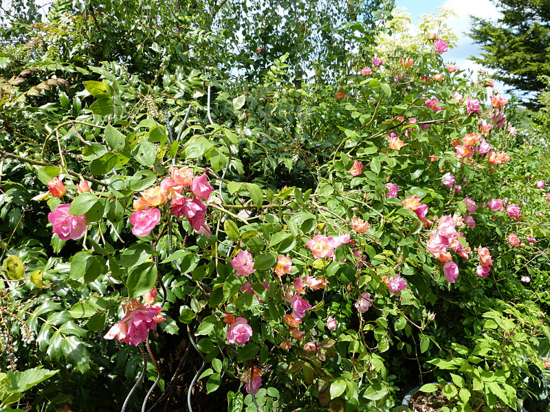 jardin des `MAL`AKHIM  - Page 4 Lysiane:visite_du_jardin:2014:p1120036