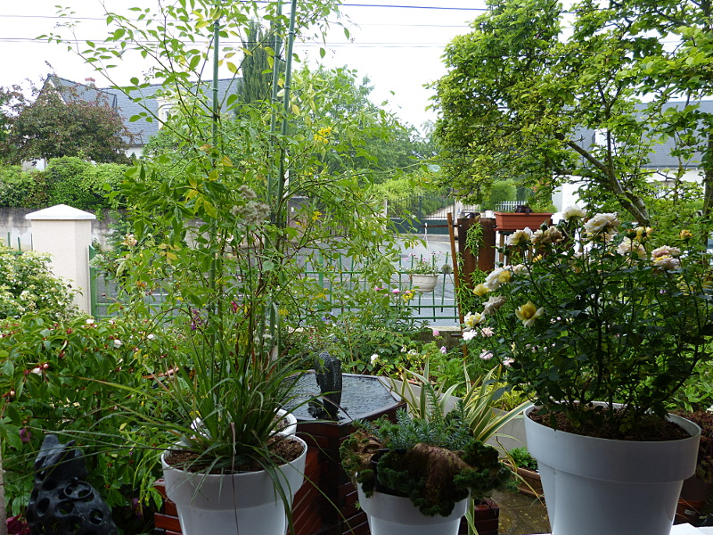jardin des `MAL`AKHIM  - Page 4 Lysiane:visite_du_jardin:2014:p1120312