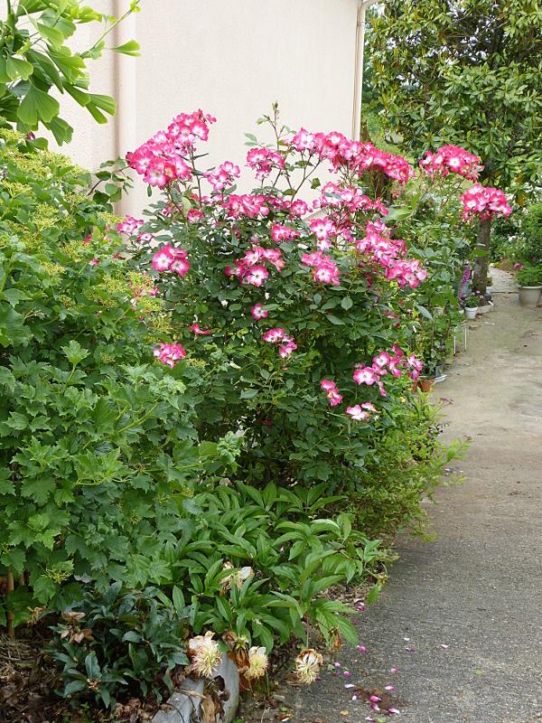 jardin des `MAL`AKHIM  - Page 4 Lysiane:visite_du_jardin:2014:p1120867