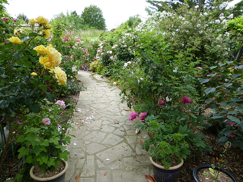 jardin des `MAL`AKHIM  - Page 4 Lysiane:visite_du_jardin:2014:p1120878