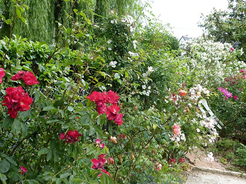 jardin des `MAL`AKHIM  - Page 4 Lysiane:visite_du_jardin:2014:p1120886