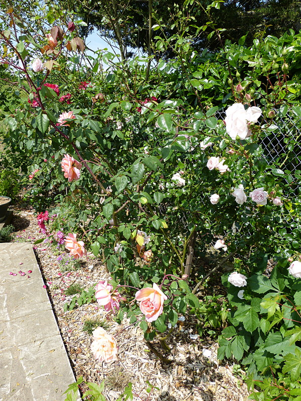 jardin des `MAL`AKHIM  - Page 4 Lysiane:visite_du_jardin:2014:p1130143