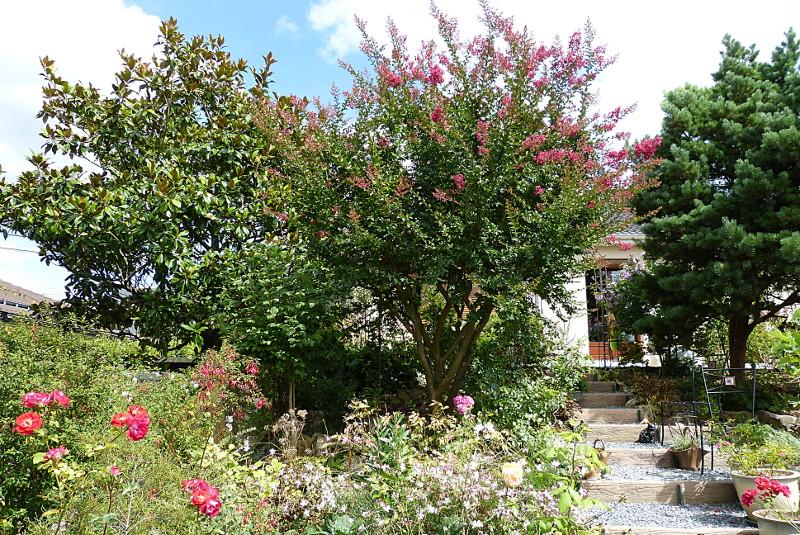 jardin des `MAL`AKHIM  - Page 4 Lysiane:visite_du_jardin:2014:p1150476