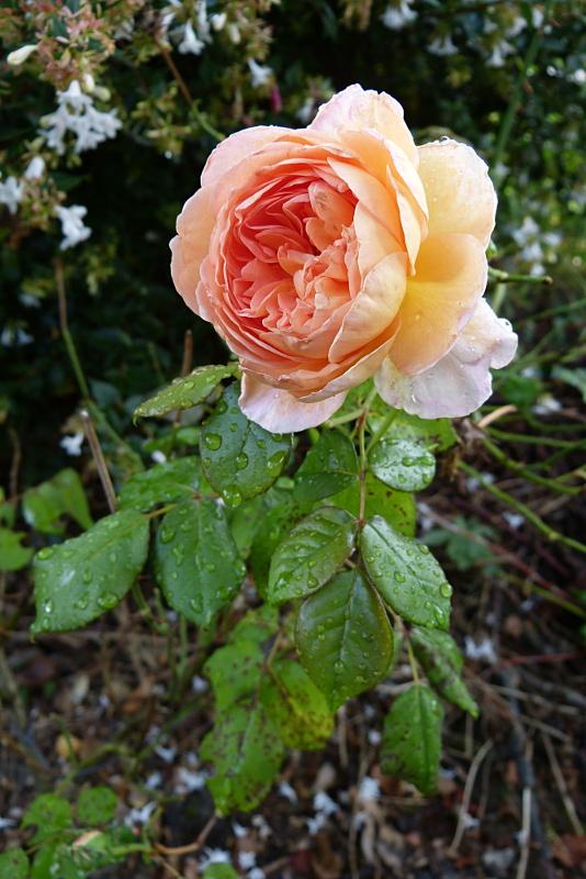 jardin des `MAL`AKHIM  - Page 4 Lysiane:visite_du_jardin:2014:p1150680