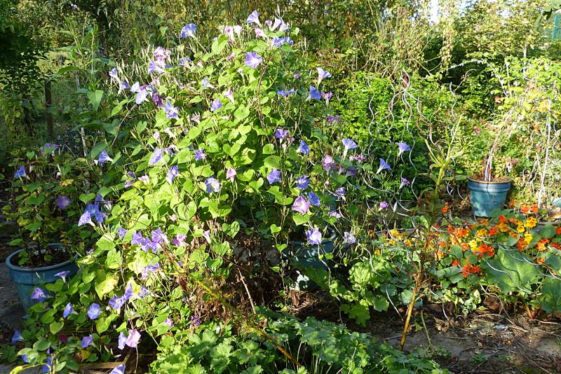jardin des `MAL`AKHIM  - Page 4 Lysiane:visite_du_jardin:2014:p1150770