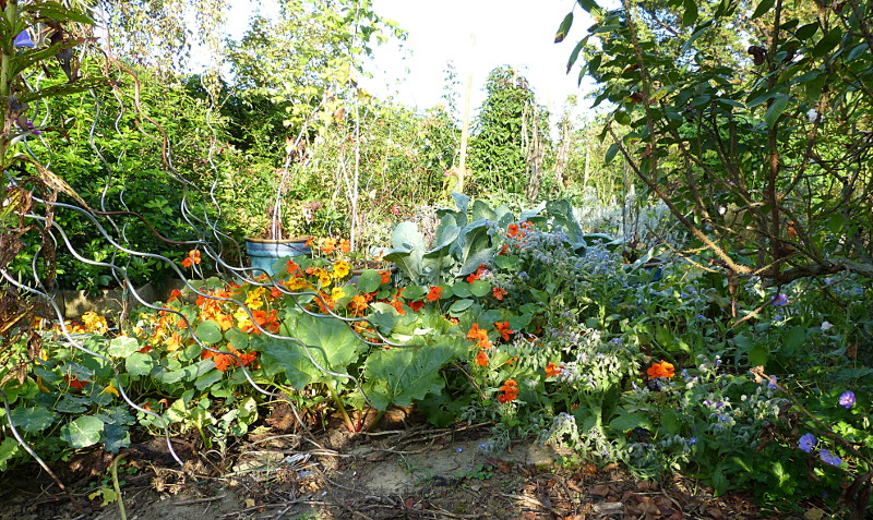 jardin des `MAL`AKHIM  - Page 4 Lysiane:visite_du_jardin:2014:p1150772