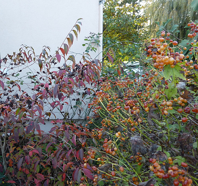 jardin des `MAL`AKHIM  - Page 5 Lysiane:visite_du_jardin:2014:p1160055