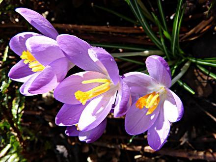 jardin des `MAL`AKHIM  - Page 5 Lysiane:visite_du_jardin:2015:p1170363