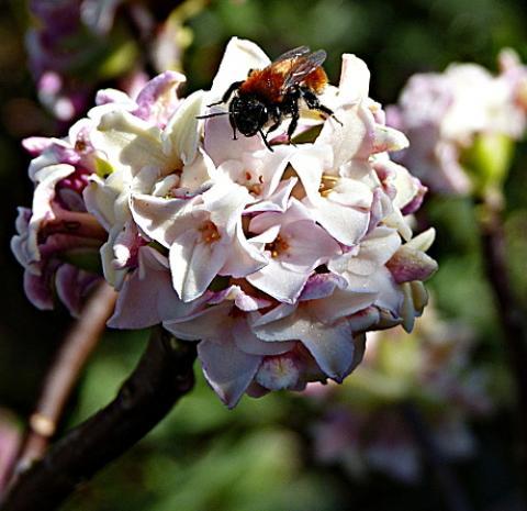 jardin des `MAL`AKHIM  - Page 5 Lysiane:visite_du_jardin:2015:p1170468