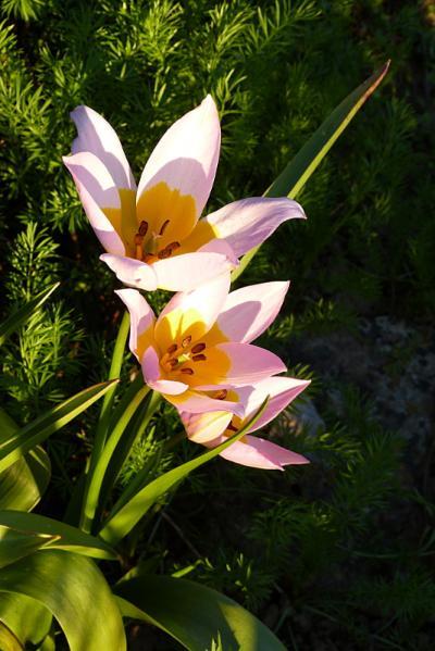 jardin des `MAL`AKHIM  - Page 5 Lysiane:visite_du_jardin:2015:p1170662