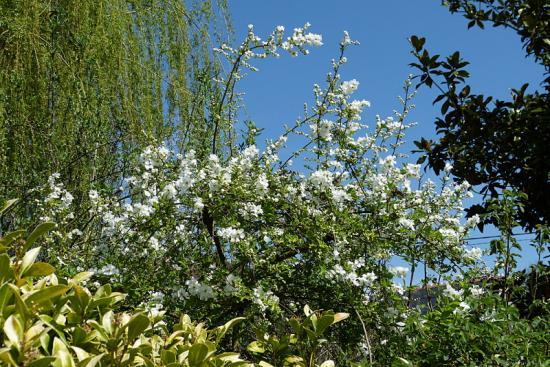 jardin des `MAL`AKHIM  - Page 5 Lysiane:visite_du_jardin:2015:p1170752