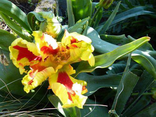 jardin des `MAL`AKHIM  - Page 5 Lysiane:visite_du_jardin:2015:p1170900