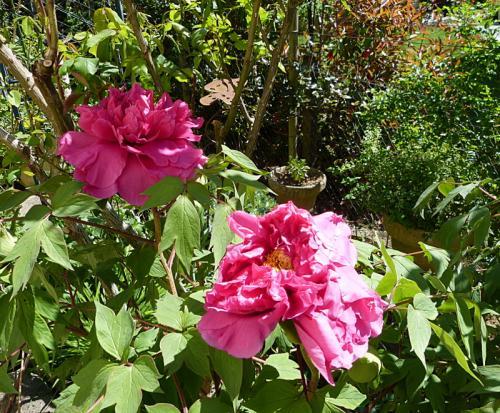 jardin des `MAL`AKHIM  - Page 5 Lysiane:visite_du_jardin:2015:p1180005
