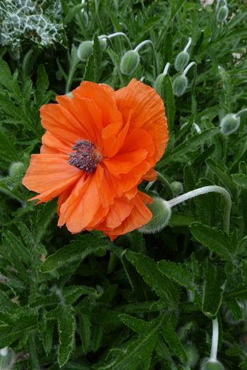 jardin des `MAL`AKHIM  - Page 5 Lysiane:visite_du_jardin:2015:p1180055