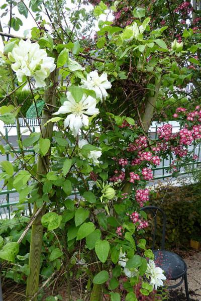 jardin des `MAL`AKHIM  - Page 6 Lysiane:visite_du_jardin:2015:p1180126