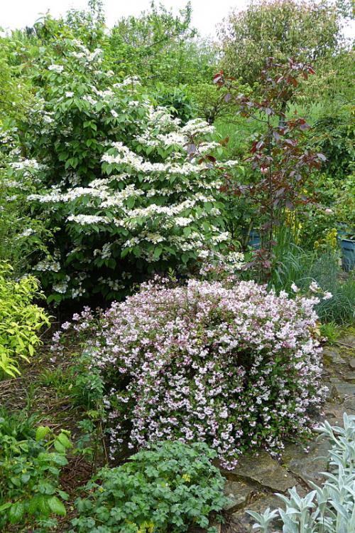 jardin des `MAL`AKHIM  - Page 6 Lysiane:visite_du_jardin:2015:p1180175