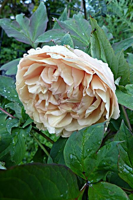 jardin des `MAL`AKHIM  - Page 6 Lysiane:visite_du_jardin:2015:p1180233