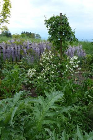 jardin des `MAL`AKHIM  - Page 6 Lysiane:visite_du_jardin:2015:p1180236