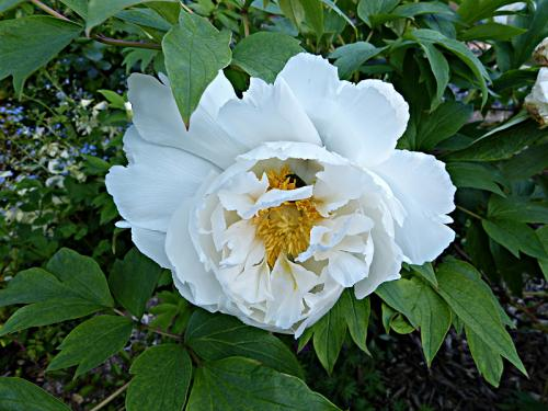 jardin des `MAL`AKHIM  - Page 6 Lysiane:visite_du_jardin:2015:p1180261