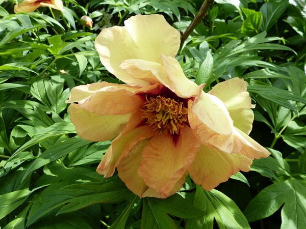 jardin des `MAL`AKHIM  - Page 6 Lysiane:visite_du_jardin:2015:p1180328