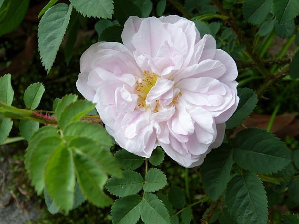 jardin des `MAL`AKHIM  - Page 6 Lysiane:visite_du_jardin:2015:p1180368