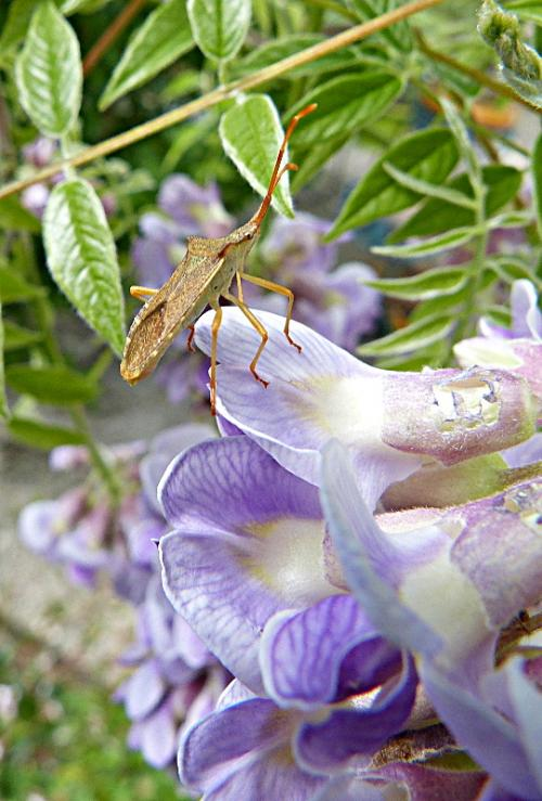 jardin des `MAL`AKHIM  - Page 6 Lysiane:visite_du_jardin:2015:p1180609