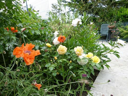 jardin des `MAL`AKHIM  - Page 6 Lysiane:visite_du_jardin:2015:p1180711