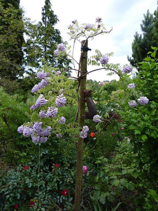 jardin des `MAL`AKHIM  - Page 6 Lysiane:visite_du_jardin:2015:p1180745