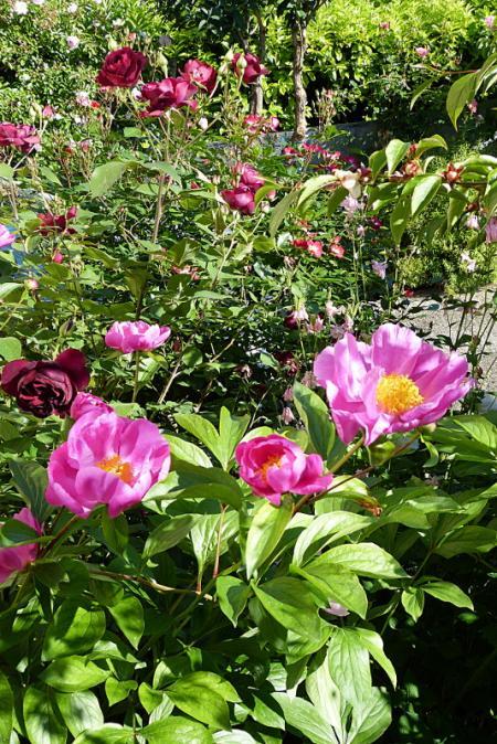 jardin des `MAL`AKHIM  - Page 6 Lysiane:visite_du_jardin:2015:p1180808