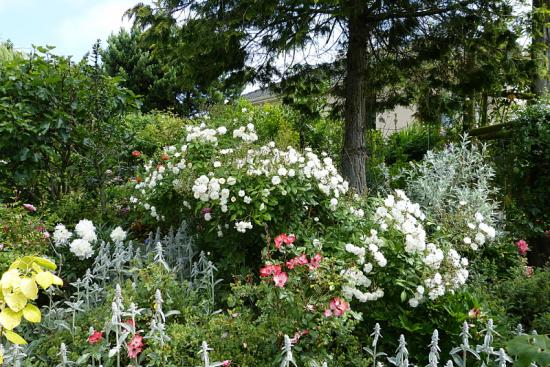 jardin des `MAL`AKHIM  - Page 6 Lysiane:visite_du_jardin:2015:p1180860