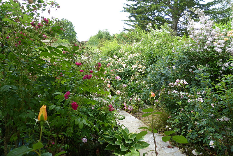 jardin des `MAL`AKHIM  - Page 6 Lysiane:visite_du_jardin:2015:p1180970