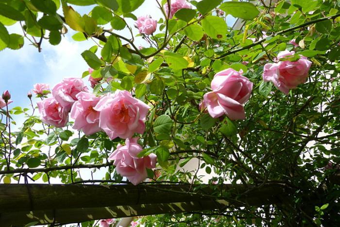 jardin des `MAL`AKHIM  - Page 6 Lysiane:visite_du_jardin:2015:p1190030