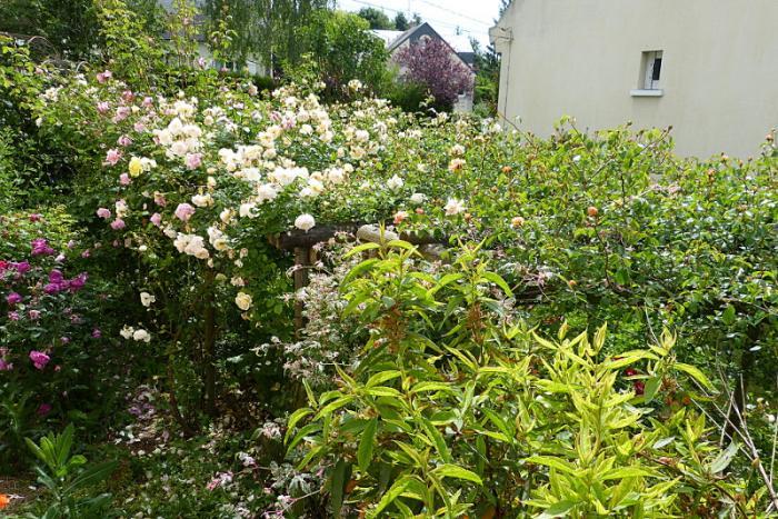 jardin des `MAL`AKHIM  - Page 6 Lysiane:visite_du_jardin:2015:p1190040