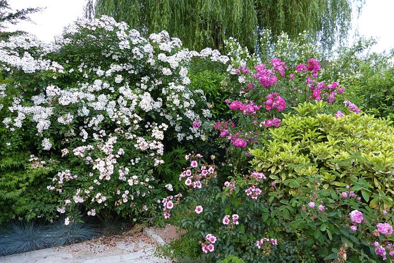 jardin des `MAL`AKHIM  - Page 6 Lysiane:visite_du_jardin:2015:p1190079