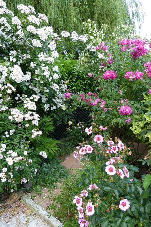 jardin des `MAL`AKHIM  - Page 6 Lysiane:visite_du_jardin:2015:p1190080