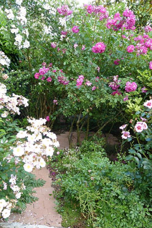 jardin des `MAL`AKHIM  - Page 6 Lysiane:visite_du_jardin:2015:p1190082