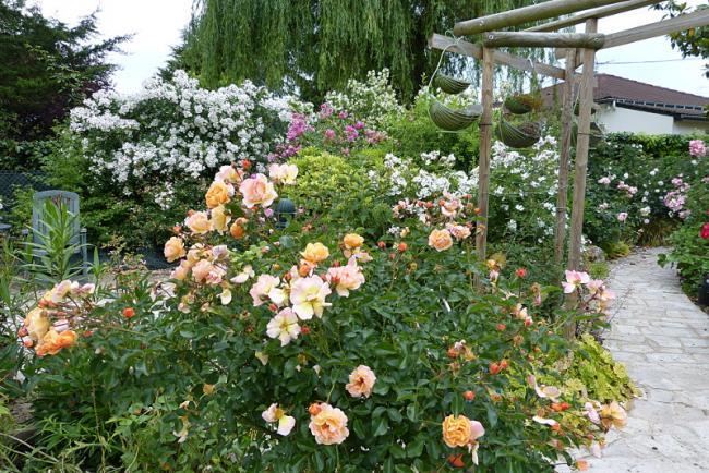 jardin des `MAL`AKHIM  - Page 6 Lysiane:visite_du_jardin:2015:p1190136