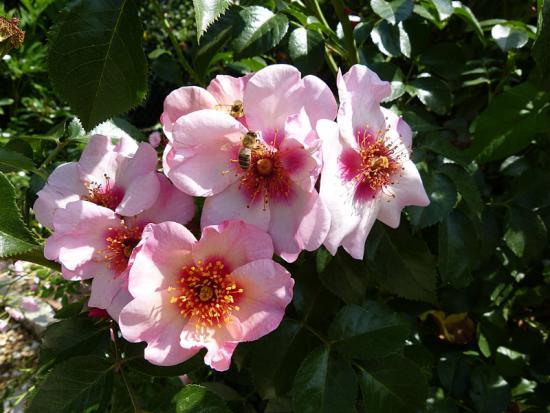 jardin des `MAL`AKHIM  - Page 6 Lysiane:visite_du_jardin:2015:p1190169