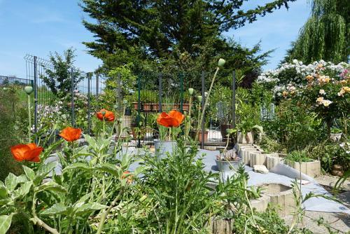 jardin des `MAL`AKHIM  - Page 6 Lysiane:visite_du_jardin:2015:p1190204
