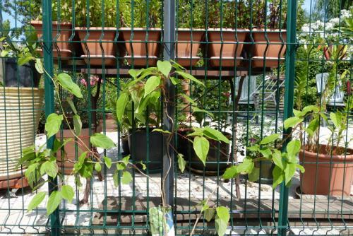 jardin des `MAL`AKHIM  - Page 6 Lysiane:visite_du_jardin:2015:p1190205