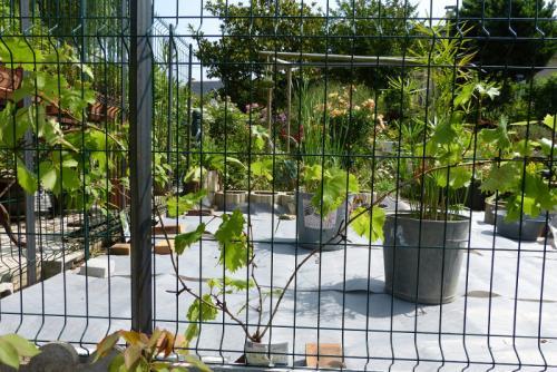 jardin des `MAL`AKHIM  - Page 6 Lysiane:visite_du_jardin:2015:p1190207