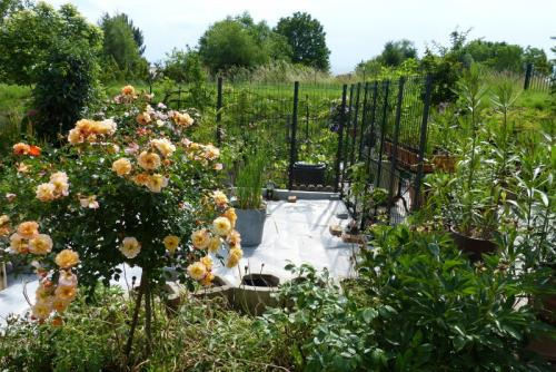 jardin des `MAL`AKHIM  - Page 6 Lysiane:visite_du_jardin:2015:p1190248