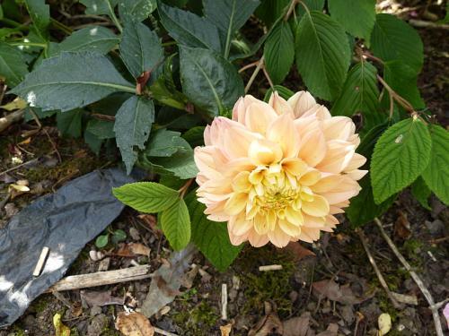 jardin des `MAL`AKHIM  - Page 6 Lysiane:visite_du_jardin:2015:p1200202