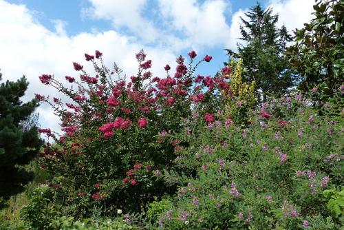 jardin des `MAL`AKHIM  - Page 6 Lysiane:visite_du_jardin:2015:p1200235