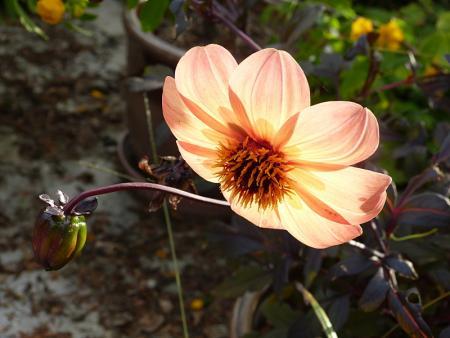 jardin des `MAL`AKHIM  - Page 6 Lysiane:visite_du_jardin:2015:p1200406