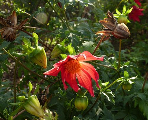 jardin des `MAL`AKHIM  - Page 6 Lysiane:visite_du_jardin:2015:p1200425