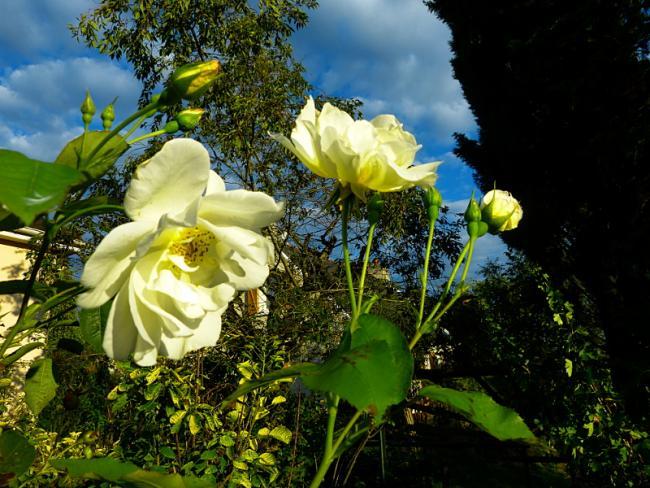 jardin des `MAL`AKHIM  - Page 6 Lysiane:visite_du_jardin:2015:p1200440