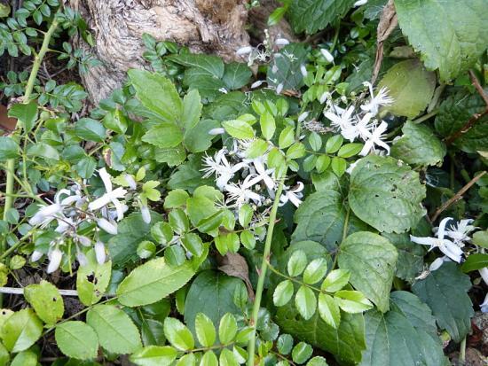 jardin des `MAL`AKHIM  - Page 6 Lysiane:visite_du_jardin:2015:p1200463